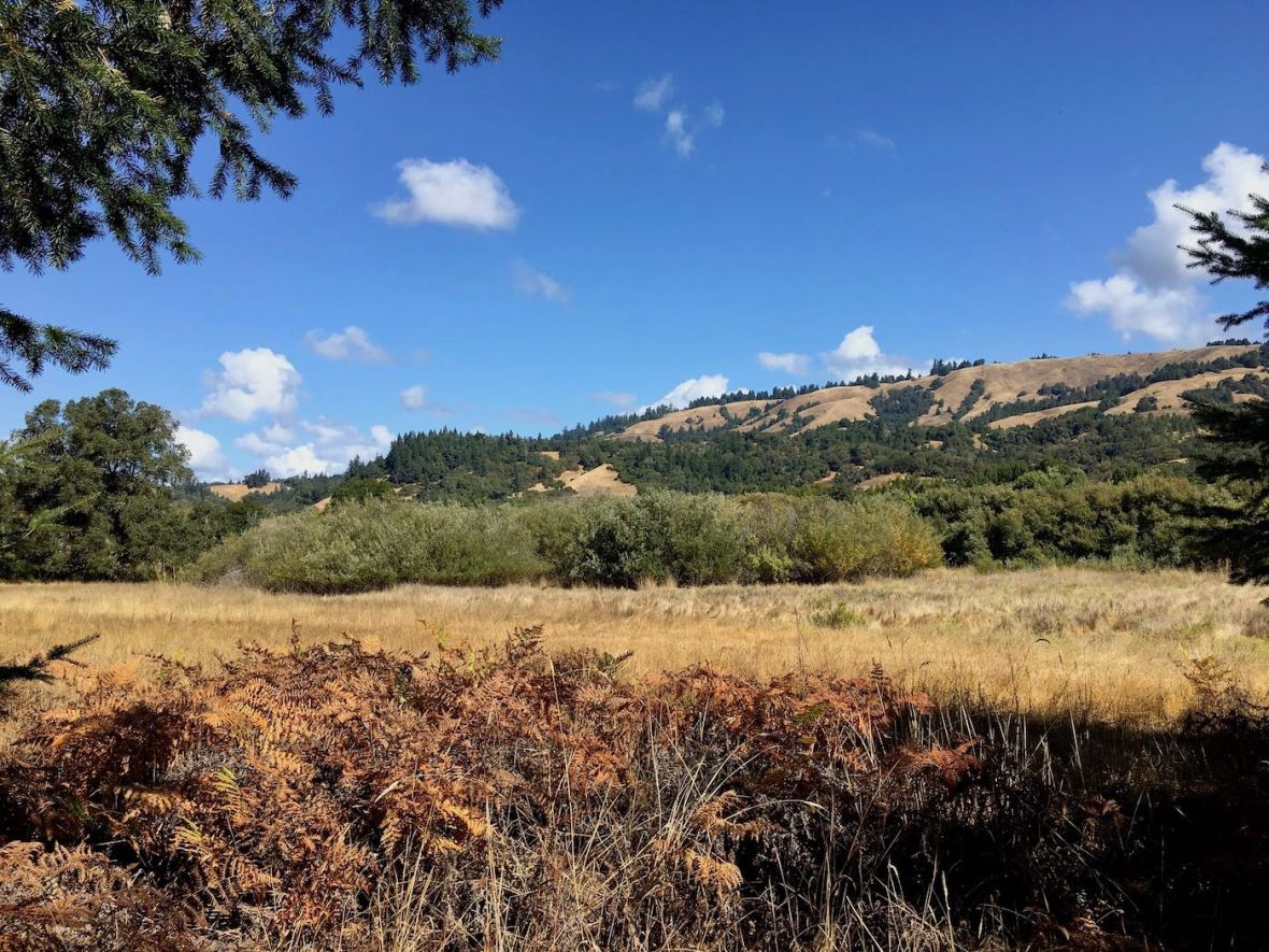Early autumn color in California's Hendy Woods State Park