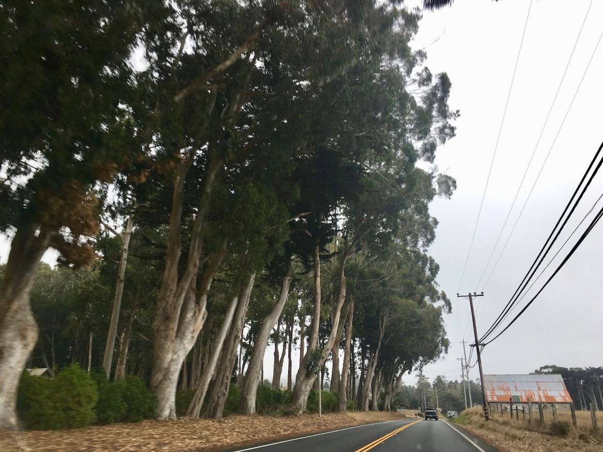 Tall trees and farm along Pacific Coast Highway 1 near Mendocino, California