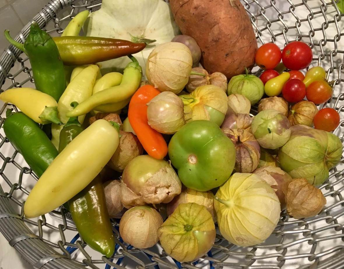 Community garden harvest: peppers, tomatoes, and tomatillos