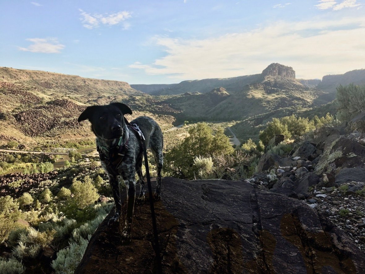 Juniper the Wonder Dog on the Picuris Trail in Orilla Verde Recreation Area