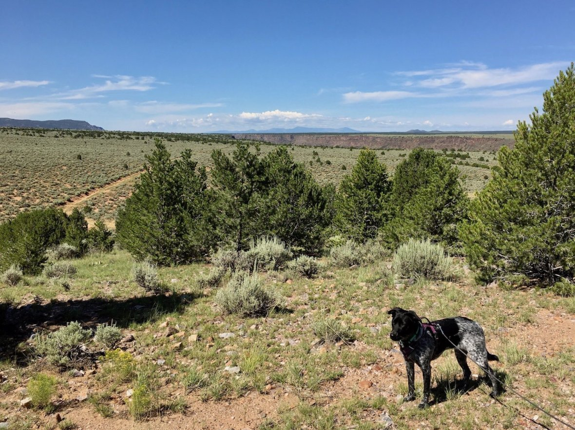 Juniper the Wonder Dog at the end of the Picuris Trail in Orilla Verde Recreation Area