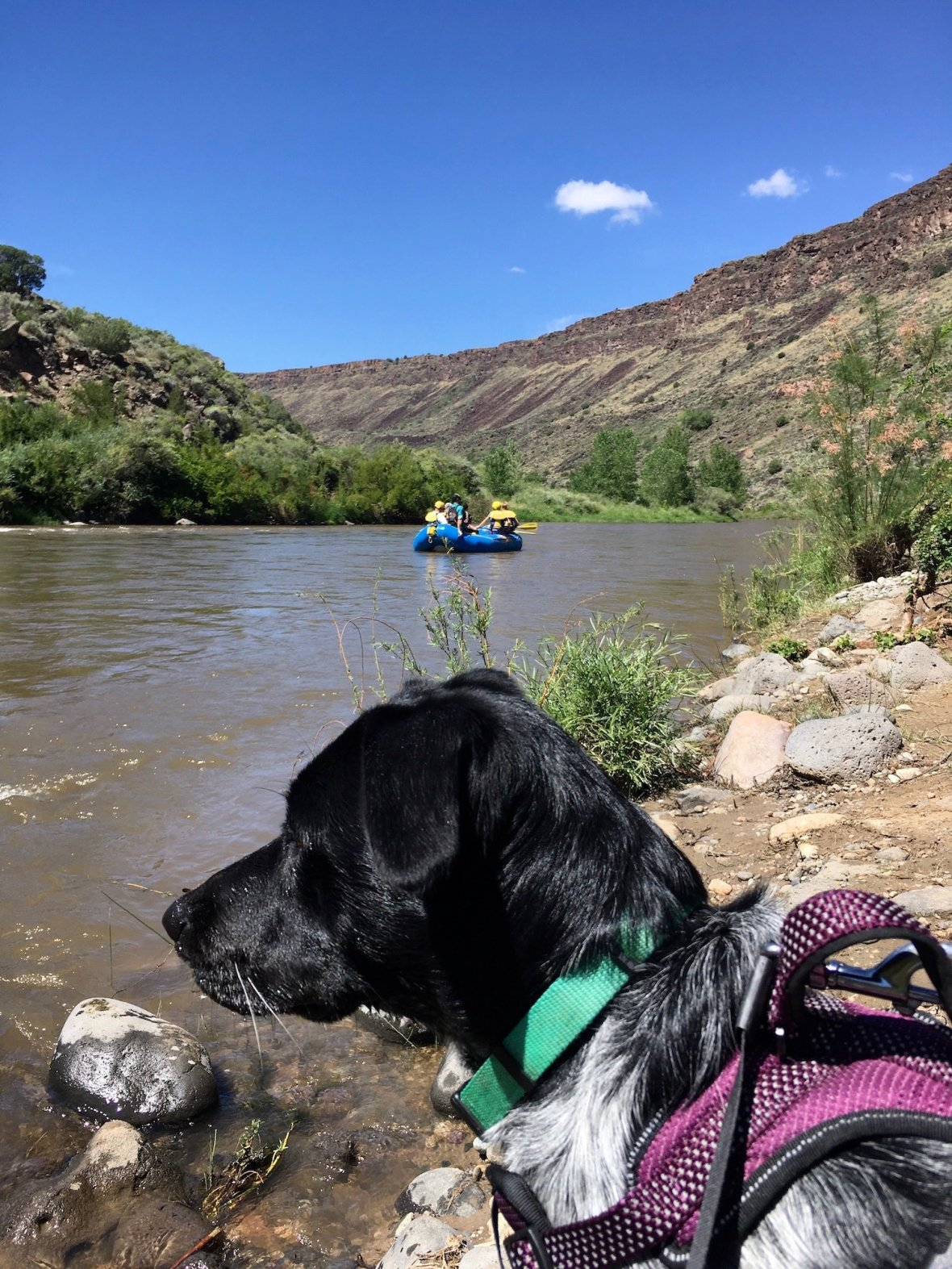Juniper the Wonder Dog and rafters on the Rio Grande