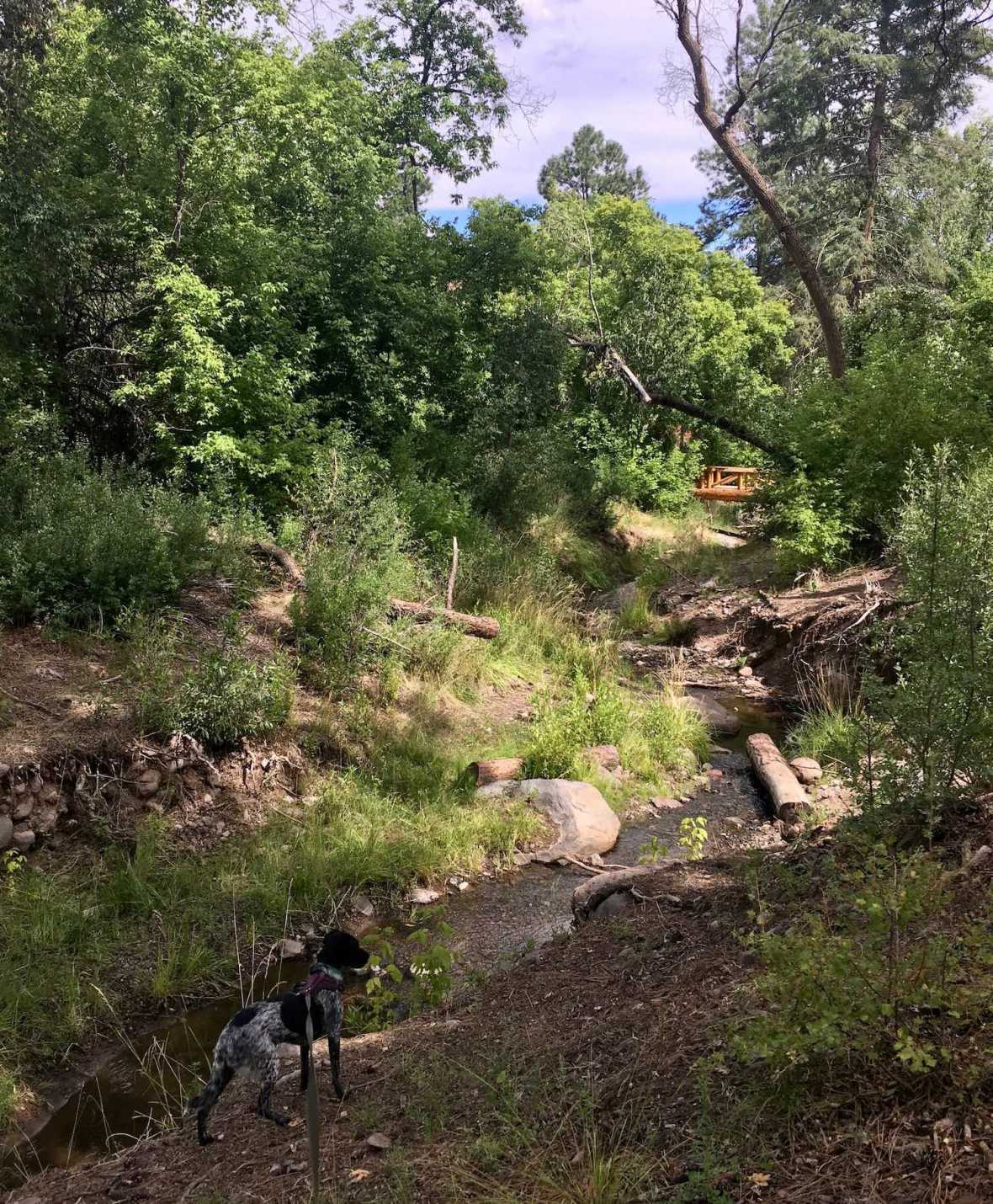 Frijoles creek beside the Cottonwood picnic area in Bandelier National Monument