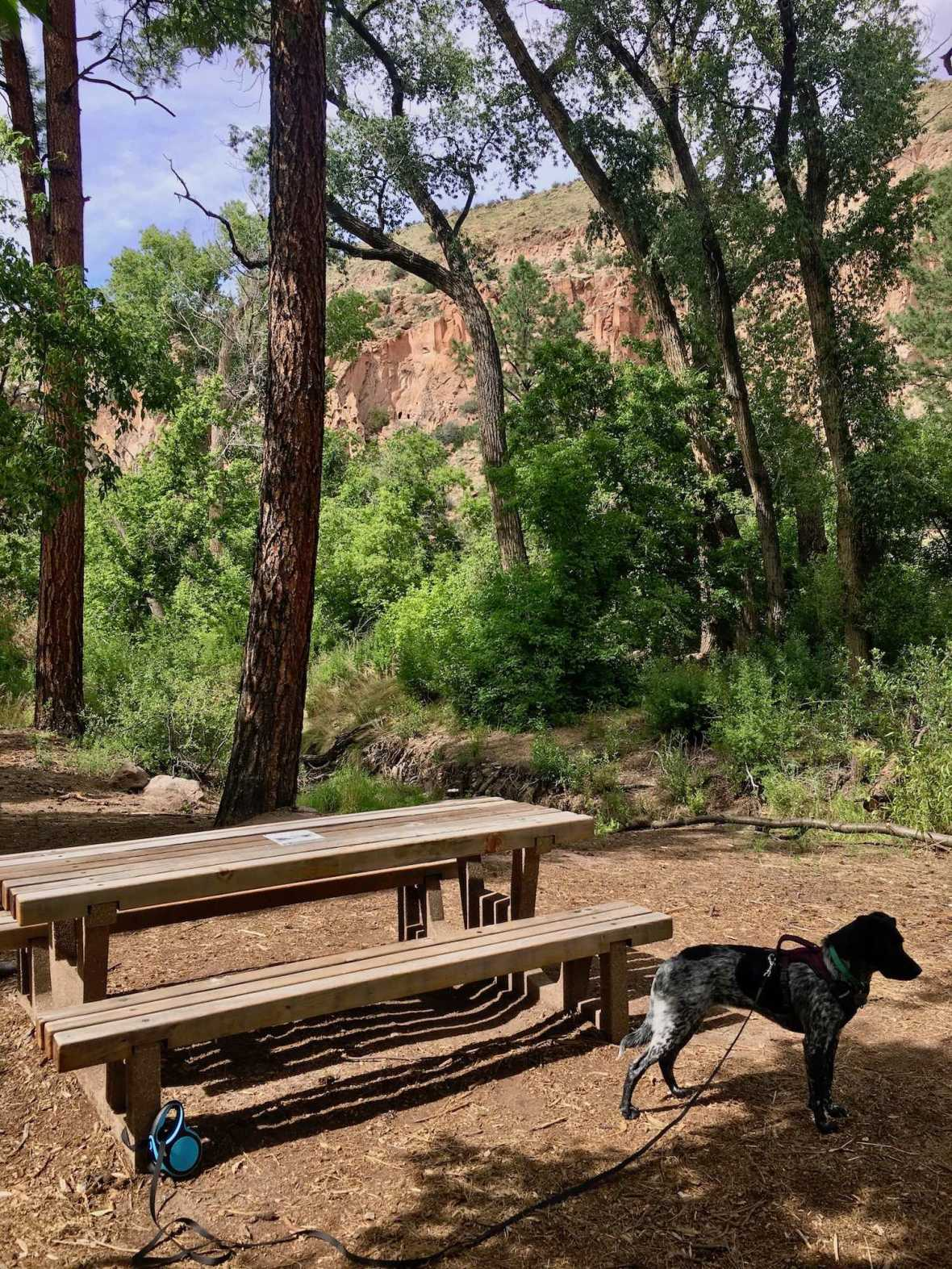 Juniper at dog-friendly Cottonwood picnic area in Bandelier National Monument