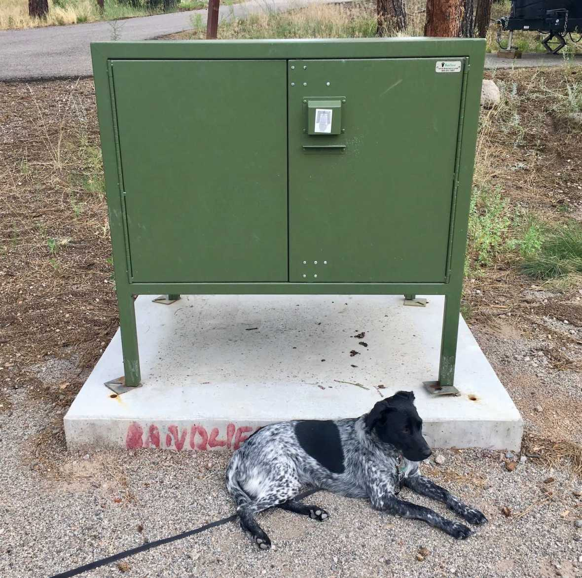 Juniper guards the bear box at my campsite in Bandelier National Monument