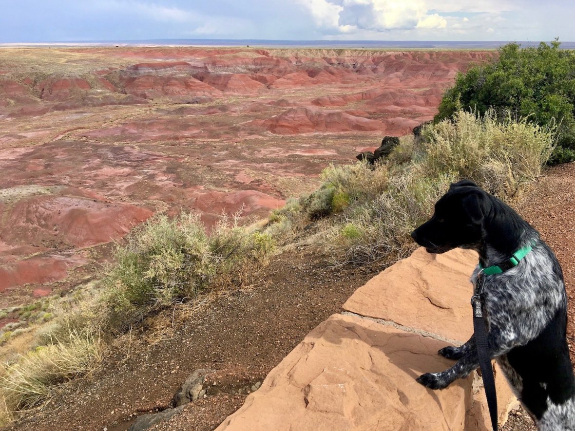 Juniper the Wonder Dog at the Painted Desert in Petrified Forest National Park