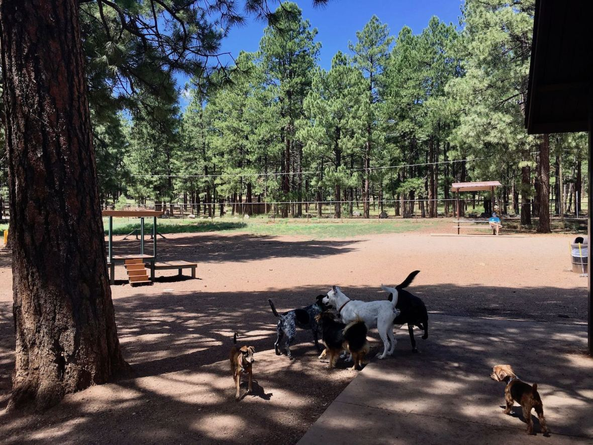 Thorpe Bark Park dog park in Flagstaff, Arizona