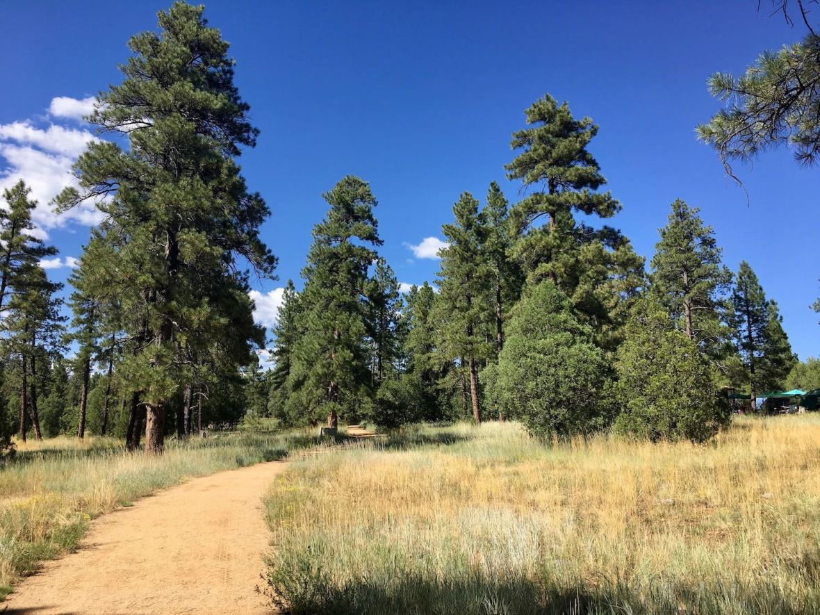 Venturing off the paved path at Oak Creek Overlook, Coconino National Forest